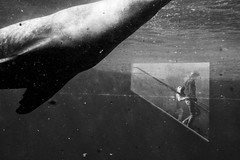 (Rainer Nowotny) Tags: street zoo streetphotography human sealion artlibres