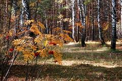 DSC_6002 (Rustam Bikbov) Tags: autumn september 2012    sverdlovskoblast