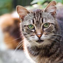 Street cat 119 (Yalitas) Tags: pet cats cat canon kat feline chat kitty greeneyes gato felino katze katzen kot kedi kass gatta streetcat kotka  kocka  katte  katzchen kottur catmuzzle