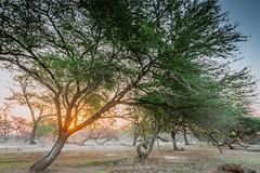 Sunrise (Ankush.Thakur) Tags: wallpaper india nature sunrise photography punjab ludhiana thakur ankush vsco vscocam ankushthakurphotography ankushthakur beingphotopgrapher