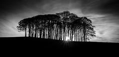 """Haircut Hill"" at Liftondown, Devon (Dom Haughton) Tags: trees sunset england sky blackandwhite cloud blancoynegro canon mono blackwhite cornwall moody noiretblanc devon pretoebranco biancoenero westcountry canoneos70d"