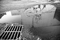 Rat (Michael Brooking Photography) Tags: blackandwhite elephant reflection umbrella graffiti rat drain stocktoncalifornia michaelbrookingphotography
