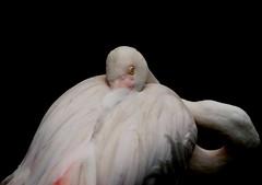 oiseau 6