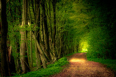 Via sacra (matthiasstiefel) Tags: light green forest way licht spring path frstenfeldbruck grn wald weg frhling pfad eichenau