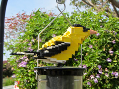LEGO bird (Bolt of Blue) Tags: lego palosverdes southcoastbotanicgarden seankenney natureconnects