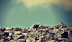 Saludo al sol (Luz Adriana Villa A.) Tags: de mexico nikon yucatan tulum ruinas iguana peninsula lizzard mayas roo quintana qroo luza luzavilla d3100