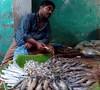 মাছ বিক্রেতা (RiddhoRaju) Tags: portrait fish shop market bongo progress business fishmarket bengal bangladesh bangla prosperity bengali shopkeeper htc bangladeshi bangali fishseller jessore anawesomeshot thefishmonger photoghrapy fishphotography catchthedream fishbusiness jessorebangladesh rajudey riddhoraju মাছব্যবসায়ী fishmarketjessore jessorekhulnabangladesh মাছবাজার মাছবিক্রেতা riddhorajuphotography যশোরমাছবাজার যশোরখুলনাবাংলাদেশ