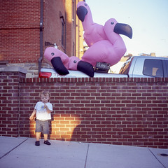 (patrickjoust) Tags: pink boy usa sun color brick 6x6 film wall analog america truck us kid md focus fuji mechanical united flamingo north patrick maryland slide baltimore chrome medium format states manual expired joust e6 hampden estados llewelyn reversal unidos fujichromeastia100f autaut patrickjoust lipcarollopautomatic28