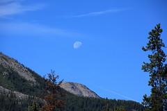 Moonrise (Dawn Coyote) Tags: park trees moon mountain mountains tree nationalpark jasper parks moonrise nationalparks jaspernationalpark