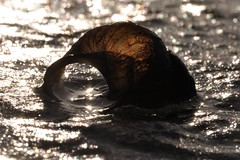 Sternentor / stargate (nirak68) Tags: winter cold ice river deutschland lbeck eis snailshell schneckenhaus eingefroren wakenitz flus zugefroren icebound 009366 c2016karinslinsede