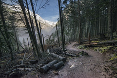 Avalanche Lake- Path In The Woods (GlacierNPS) Tags: fall autumn glaciernationalpark nps nationalparks montana