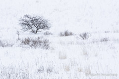 bitter snow (nakashy) Tags: trees winter white snow color colour tree nature japan canon landscape photography eos photo plateau 5d nagano 70200mm 2016 canoneos5dmarkiii 5dmk3 5d3