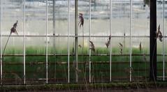 Decay (Elisa1880) Tags: netherlands den nederland hague greenhouse haag kassen the vocht landgoed ockenburgh