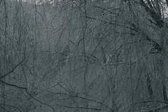 Brunch world_8152 (Cleronomas) Tags: winter frost branch monochrone