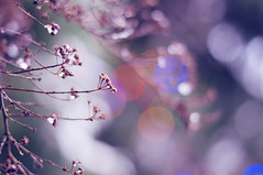 Winter Jewels (Paulina_77) Tags: winter light mist plant blur cold color detail ice nature weather misty fog closeup mystery season lens 50mm prime frozen cool blurry haze bush nikon colorful soft frost mood moody dof bright crystal bokeh outdoor pastel details softness dream frosty pale depthoffield pastels romantic fade dreamy chilly iced shallow colourful icy nikkor delicate dim vague tones daydream chill depth atmospheric tender gentle selective subtle 50mm18 wintry focusing d90 nikkor50mm18 mistiness bokehlicious nikond90 atmnosphere 50mm18g pola77