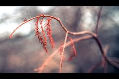Last Color (rg69olds) Tags: winter color tree canon nebraska downtown branch omaha 6d canondigitalcamera lauritzengardens canonef24105mmf4lisusm canoneos6d 1312016