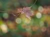 Vintage woods (3) (Karsten Gieselmann) Tags: microfourthirds grün olympus vintagelens winter sonne bokeh wald em5markii blätter braun helios44358mmf20 kgiesel farbe jahreszeit brown color forest green m43 mft season sun wood teublitz bayern deutschland de m42 em5mark2