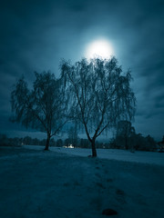Moonlit Tree (Magnus Eriksson75) Tags: longexposure nightphotography winter moon snow night sweden olympus zuiko moonshine