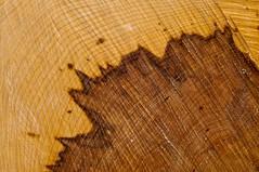 Fleck (koDesign) Tags: wood brown tree nikon wave layer braun minimalism holz baum rinde fleck wellen stamm d300 nikkor50mmf14d kettensge schichten fulnis minimalismus