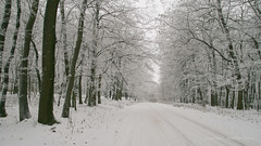 Jan 6: Winter Forest Road (johan.pipet) Tags: trees winter snow cold nature les forest canon europe flickr january eu greenwood freeze slovensko slovakia palo zima bratislava clad sneh bartos stromy dubravka barto