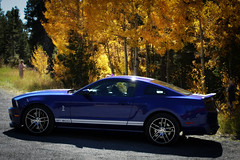 2011 Shelby Mustang GT500 (coconv) Tags: pictures auto old blue mountains fall classic cars colors car vintage photo automobile colorado image grove photos muscle antique picture 11 images vehicles photographs photograph shelby vehicle autos mustang collectible aspen collectors coupe automobiles fastback gt500 2011 blart