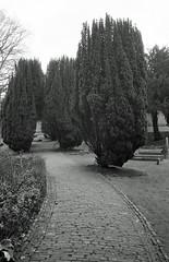 Watts Cemetery 6 (Song-to-the-Siren) Tags: blackandwhite bw 35mm 35mmfilm 100 pan analogue ilford compactcamera classiccamera ricohgr1 ilfordpan100