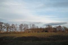 landscape (BZK2011) Tags: winter landscape nikon january felder coolpix landschaft bume januar p340