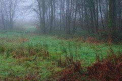 (vieubab) Tags: nature branches hiver arbres extrieur chemin fort bois brume calme feuillage atmosphre branchage luminosit