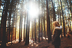 (nic lawrance) Tags: trees light shadow people brown sun nature girl lines yellow woodland shine warmth cotswolds gloucestershire pines figure tall shape