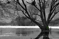 Zone humide / Wetland (Pierrotg2g) Tags: bw lake tree nature landscape nikon lac nb savoie paysage arbre d90