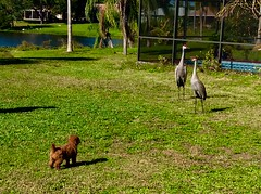 Sadie meeting some new 'friends'!