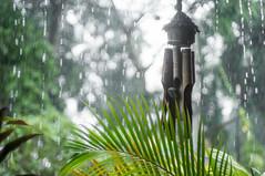 raining (kuuan) Tags: ltm bali rain canon dof bamboo raindrops mf raining manualfocus windchime 1550 palmleaf wideopen serenar sonnar m39 f1550mm canonltmf1550mm canonm39f1550mm