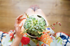 Plant Therapy. (Hello i'm Wild !) Tags: sonyrx1r carlzeiss35mmf2 digital fullframe planttherapy selfportrait legs skin hand ink tattoos plant succulent girl bokeh dof light artlibres