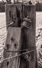 Secured (Martyn.A.Smith LRPS) Tags: wood monochrome outdoors woodwork wire post barbedwire warwickshire ratchet secured berkswell canon7d