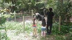 (Ana Furtado) Tags: people man children zoo nice avestruz