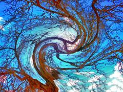 Here we go round the Mulberry bush... (tina negus) Tags: tree bush spin digitalart lincolnshire twirl swirl mulberry belton gardencentre