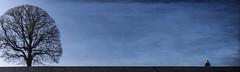 solitud a Sant Petersburg (Kaobanga) Tags: tree composition solitude russia textures soledad concept saintpetersburg minimalism conceptual minimalismo arbre texturas pigments rusia composicin concepto concepte   minimalisme sanpetersburgo solitud rssia rbol composici santpetersburg pigmentos kaobanga canon28300 canon5dmkii canon5dmk2 canon5dmarkii
