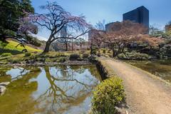 Downtown Garden  (Sharleen Chao) Tags: travel japan canon garden tokyo japanesegarden downtown day   sakura cherryblossoms springtime tokyodome     fullbloom 1635mm      5dmarkiii