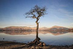 Milarrochy Bay tree (Rossco156433) Tags: tree nature water landscape loch lochlomond milarrochybay thetrossachsnationalparkscotland