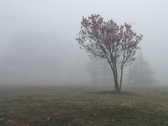 Foggy Morning (-Jeffrey-) Tags: morning mist lake tree nature weather fog outdoors mirrorlake foggy delaware dover soop sooc iphonography iphoneography