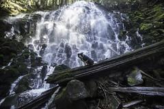 Ramona Falls (Justin Knott) Tags: dog nikon falls 24mm ramona d800 rokinon