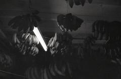 Banana banana banana (denise yeap) Tags: blackandwhite film fruits monochrome analog hc110 banana malaysia photowalk analogue shadowplay 135 neopan400 blacknwhite tropicalfruits selfdev klassew