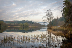 Reflections & reeds (charliegbson) Tags: scotland trossachs lochard