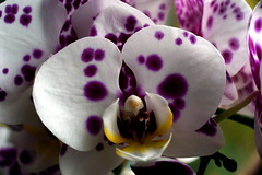 Orchidee (dl1ydn) Tags: orchid