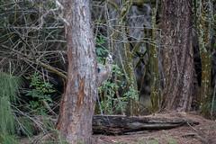 20160411-_74P9300.jpg (Lake Worth) Tags: bird nature birds animal animals wings florida outdoor wildlife feathers wetlands everglades waterbirds southflorida birdwatcher canonef500mmf4lisiiusm canoneos1dx