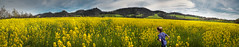 A dive into spring (Pietro Faccioli) Tags: flowers blue wild sky castle grass yellow rural landscape countryside spring italia afternoon meadow sunny hills emilia bloom emiliaromagna pietro blooming reggioemilia faccioli bianello pietrofaccioli