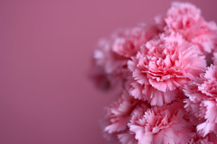 Pink waves (planosdeluz) Tags: pink canon 50mm waves bokeh flor rosa dianthus carnation 18 clavel caryophyllus 60d