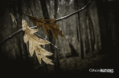 Whithering To Death (Ghost Of Nations Photography And Digital Art) Tags: orange leaves dark dead death leaf gloomy decay gothic bleak neogothic decaying liminal newgothic ghostofnations ghostofnationsphotography