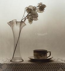 Plant and cup (still life) (CarlosConde/Photography) Tags: bw stilllife naturaleza plant film cup sony 14 negative bodegn 58mm nokton muerta blanconegro virado pelcula voigtnader ilce7m2