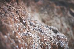 Whelks & rock (Hey hey JBA) Tags: sea rock 50mm coast scotland seaside highlands dof bokeh d750 whelk invernessshire captureone